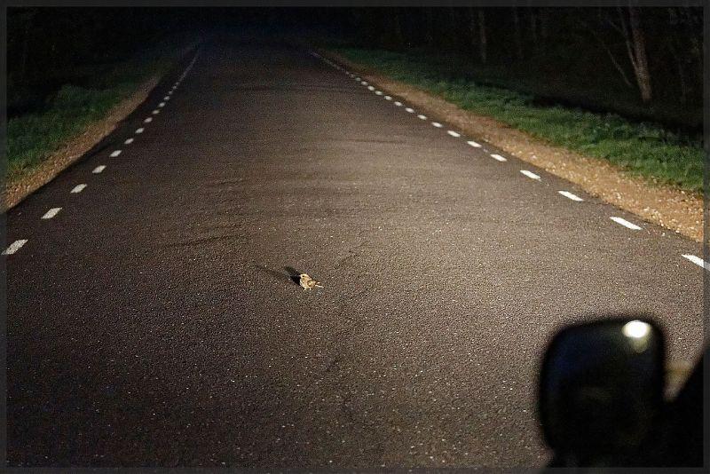 Öösorr autoteel / foto: Arne Ader