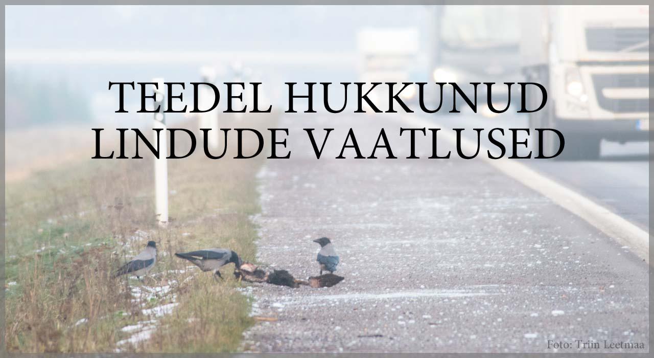 Teedel hukkunud lindude vaatlused