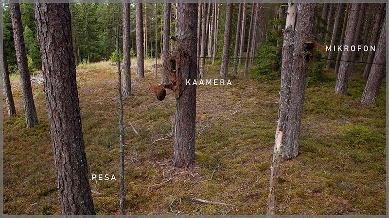 Öösorri pesakaamera / foto: Urmas Sellis